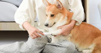 Cortadora de pelo para mascotas. Noticias Xiaomi Adictos