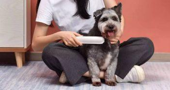 Xiaomi pone a la venta un cepillo esterilizador para mascotas capaz de neutralizar todo tipo de bacterias y parásitos. Noticias Xiaomi Adictos
