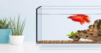 Xiaomi pone a la venta una minimalista pecera con iluminación LED y cascada de agua. Noticias Xiaomi Adictos